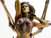 blizzard_queen-of-blade-kerrigan-sideshow_emcorner-it_-20